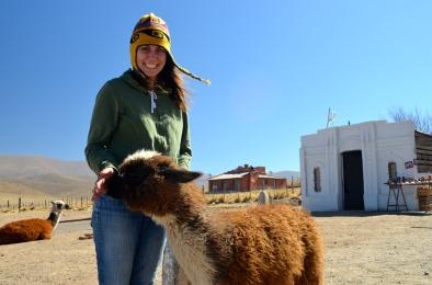 Petting a baby llama in Tucuman, Argentina.